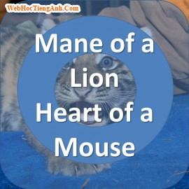 Mane of a Lion, Heart of a Mouse
