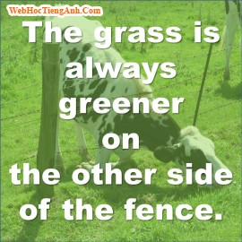 The grass is always greener on the other side of the fence, 464, Uyên Vũ, Academy.MuaBanNhanh.com, 16/09/2013 14:23:26